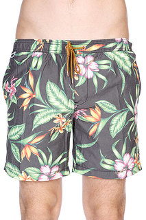 Шорты пляжные Globe Havana Pool Short Multi Coloured