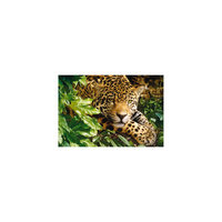 "Пазл ""Леопард"", 1000 деталей, Castorland"