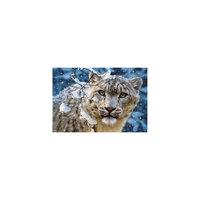 """Пазл """"Снежный леопард"""", 1500 деталей, Castorland"""