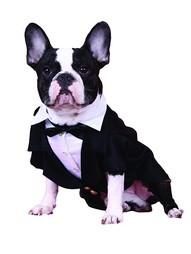 Комбинезоны для животных Doggy Dolly