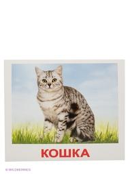 Наборы карточек РНТойс