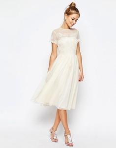 Короткое приталенное платье миди с кружевом ASOS SALON - Кремовый