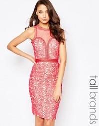 Кружевное платье‑футляр с сетчатой вставкой Little Mistress Tall