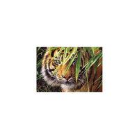 "Пазл ""Тигр"", 1500 деталей, Castorland"