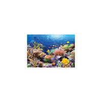 """Пазл """"Коралловый риф"""", 1000 деталей, Castorland"""