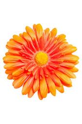 Зажим-брошь Tropical Flower