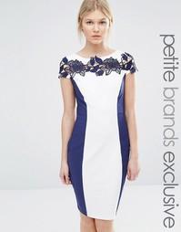 Контрастное платье-футляр с кружевной вставкой Paper Dolls Petite