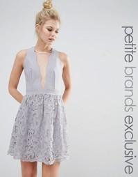 Приталенное платье с сеточкой и кружевом Little Mistress Petite