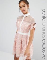 Кружевное приталенное платье мини Chi Chi London Petite Premium