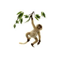 Паукообразная обезьяна, 44 см Hansa