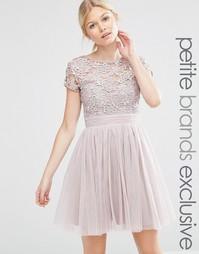 Платье мини с короткими рукавами, тюлевой юбкой и кружевным лифом Litt Little Mistress Petite