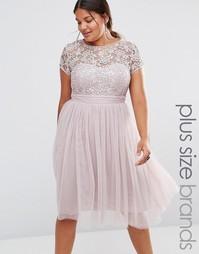 Платье миди с кружевным топом и юбкой из тюли Little Mistress Plus