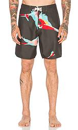 Плавательные шорты parrot - Ambsn