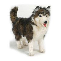 Собака породы Сибирский Хаски, 40 см Hansa