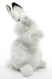 Кролик белый Hansa