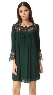 Кружевное платье Elizabeth BB Dakota