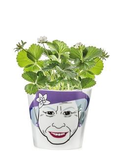 Горшки для растений Donkey