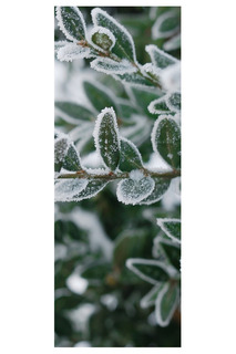 Фотообои Зима 100х270 Chernilla