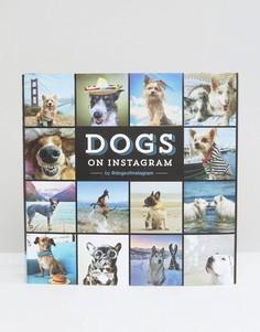Книга Dogs of Instagram - Мульти Books