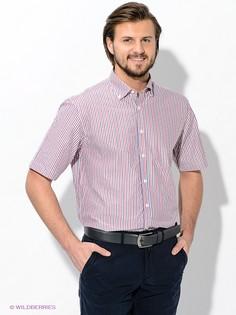 Рубашки Maestro
