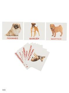Наборы карточек Вундеркинд с пеленок