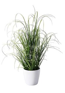 Декоративное растение Heine Home