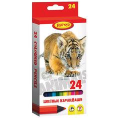 """Цветные карандаши """"Хищники"""" 24 цвета Limpopo"""