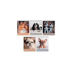 """Комплект тетрадей """"Очаровательные собаки"""" (10 шт), 48 листов, Канц-Эксмо"""