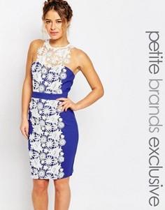 Платье-футляр с кружевной вставкой и халтером Paper Dolls Petite - Синий