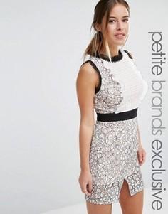 Кружевное платье‑футляр мини с фигурными краями True Decadence Petite - Мульти