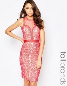 Кружевное платье‑футляр с сетчатой вставкой Little Mistress Tall - Оранжевый