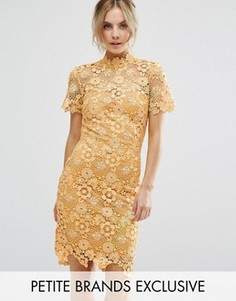 Кружевное платье-футляр премиум-класса Paper Dolls Petite - Желтый