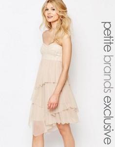 Платье-бандо миди с отделкой пайетками и тюлем John Zack Petite - Кремовый