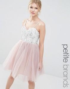 Платье для выпускного из кружева и тюля Boohoo Petite - Мульти