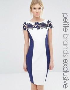 Контрастное платье-футляр с кружевной вставкой Paper Dolls Petite - Темно-синий
