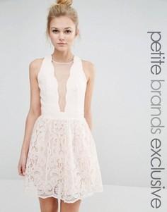 Приталенное платье с сеточкой и кружевом Little Mistress Petite - Розовый