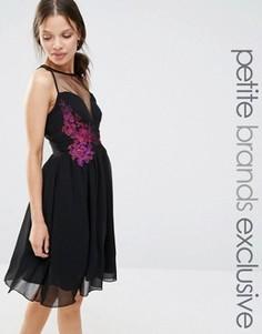 Приталенное платье с контрастной цветочной отделкой Little Mistress Petite - Черный
