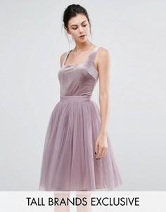 Короткое приталенное платье с бархатным лифом и тюлевой юбкой Little Mistress Tall - Фиолетовый