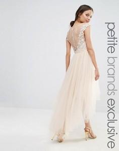 Платье миди с юбкой из тюля и фигурным кружевом сзади Chi Chi London Petite - Кремовый