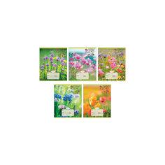 """Комплект тетрадей """"Полевые цветы"""" (10 шт), 24 листа, Канц-Эксмо"""