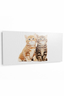 "Фотокартина ""Два котенка"" Pannorama"
