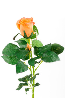 Роза EDG
