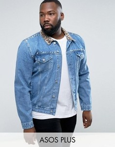 Синяя джинсовая куртка с леопардовым принтом на воротнике и отделкой заклепками ASOS PLUS - Черный