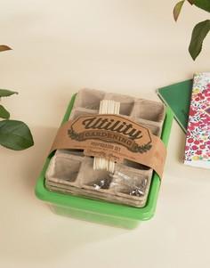 Маленький набор для выращивания садовых растений - Мульти Temerity Jones