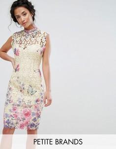 Кружевное платье-футляр с высоким воротником и принтом Paper Dolls Petite - Мульти