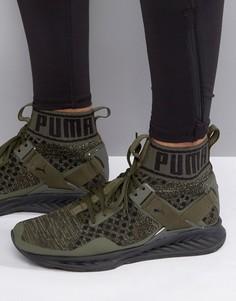 Зеленые кроссовки Puma Running Ignite Evoknit 18969705 - Зеленый
