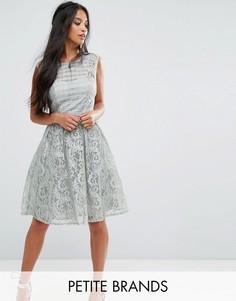 Кружевное короткое приталенное платье Little Mistress Petite - Мульти