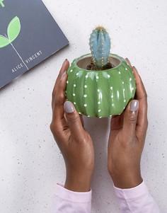 Горшок для цветов в форме кактуса Sass & Belle - Мульти