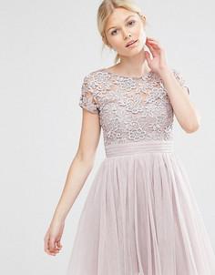 Платье мини с короткими рукавами, тюлевой юбкой и кружевным лифом Little Mistress Petite - Розовый