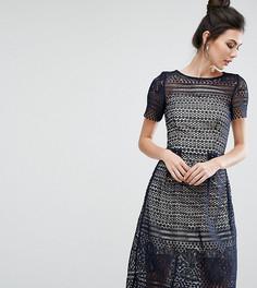 Приталенное кружевное платье миди Paper Dolls Tall - Темно-синий